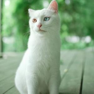 白猫财眼用户